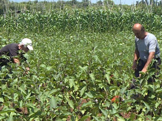 Mersinin gönüllü çiftçileri