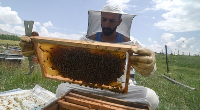 Ovacıkın arıcıları kavurucu sıcaklarda üretim yapıyor