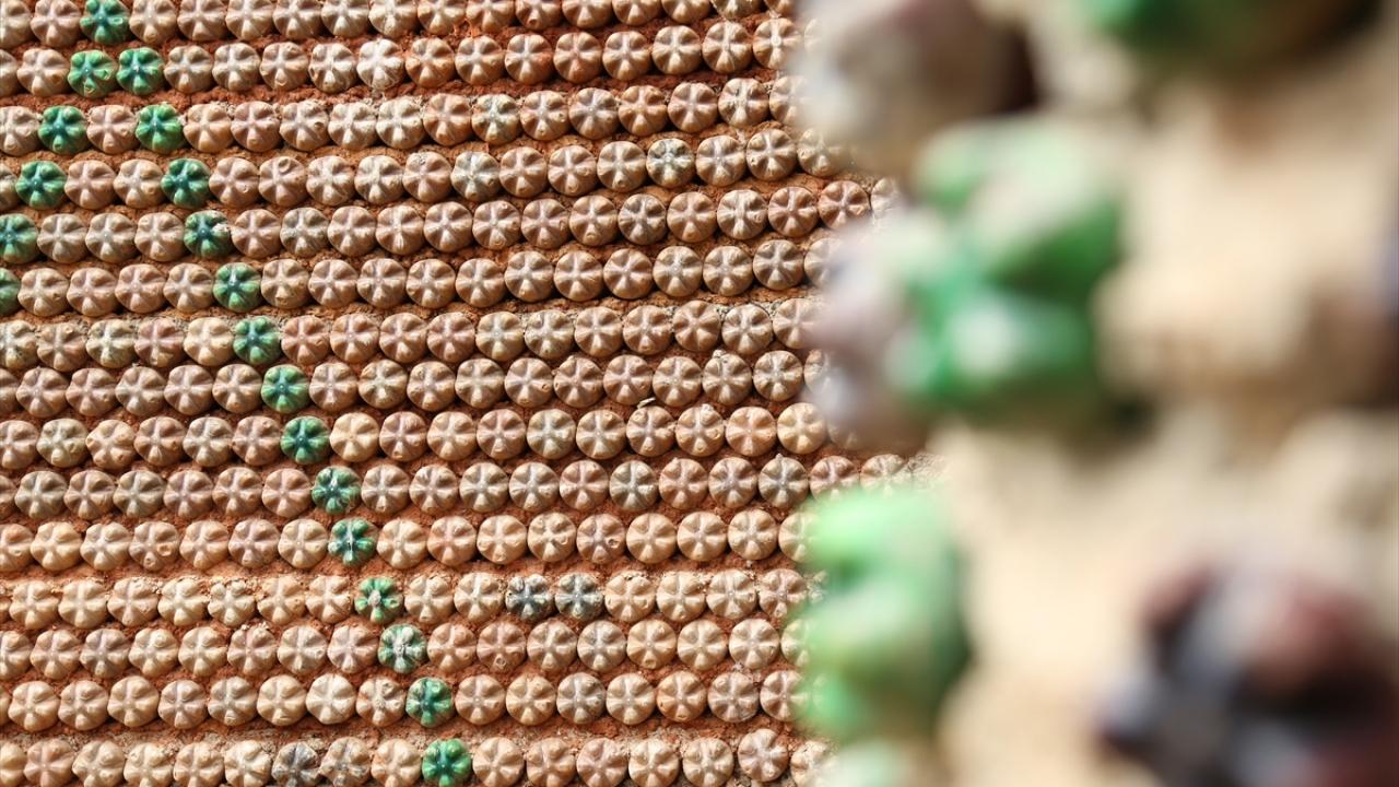Doğayı korumak için plastik şişelerden ev inşa etti