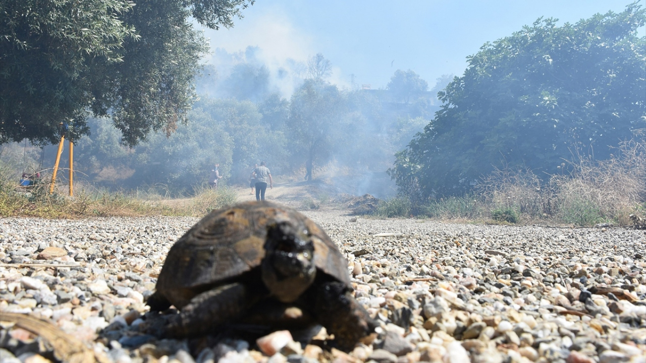 Manisada orman yangını