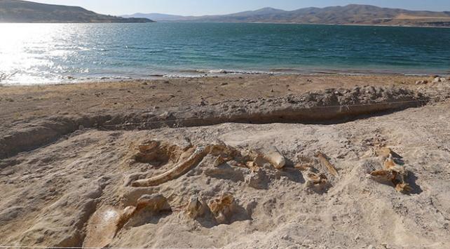 Kayseride 7,5 milyon yıllık zürafa fosili bulundu