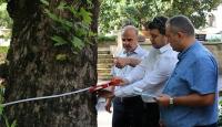 Kocaeli'de asırlık ağaçların bakımı yapılacak