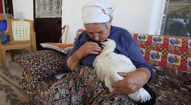 """Leylek """"Efe""""yi anne şefkatiyle büyüttü"""