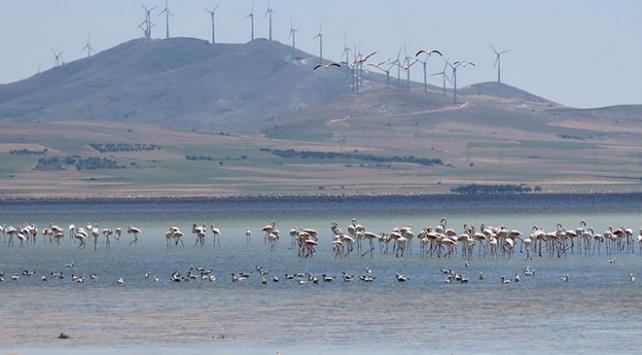 Seyfe Gölünde kuş yoğunluğu arttı