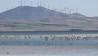 Seyfe Gölü'nde kuş yoğunluğu arttı