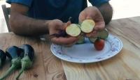 Hatay'da domates görünümlü patlıcan görenleri şaşırtıyor