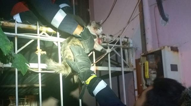 Boğazına demir korkuluk saplanan kediyi itfaiye kurtardı