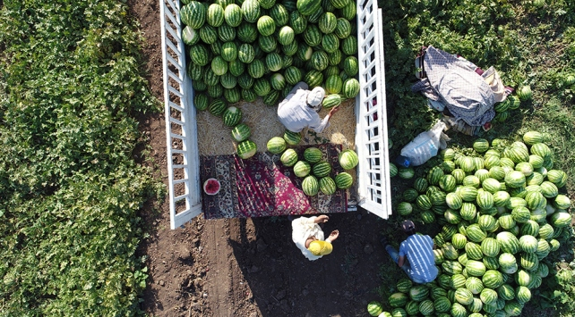 Diyarbakırda karpuz rekoltesinde yüzde 43 artış