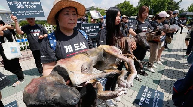 Güney Korede köpek eti yanlıları ile karşıtları gösteri yaptı
