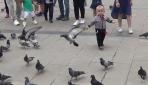 Düzcede çocukların oyun arkadaşı güvercinler