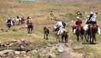 Muşlu kadınlar süt sağmak için kilometrelerce yol gidiyor