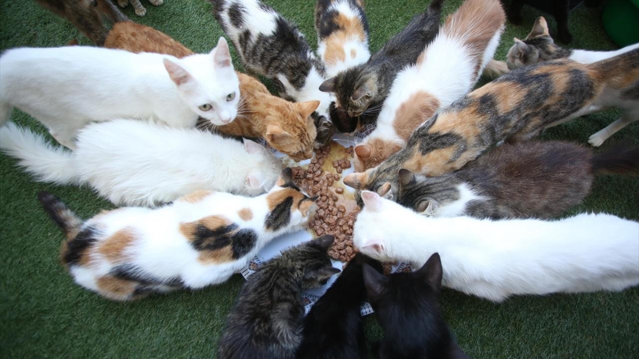 """Filistinde """"Hibanın Barınağı"""" sokak kedileri için güvenli bir ev"""