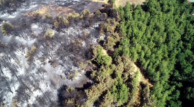 Son 10 yılda 66 bin hektar ormanlık alan yok oldu