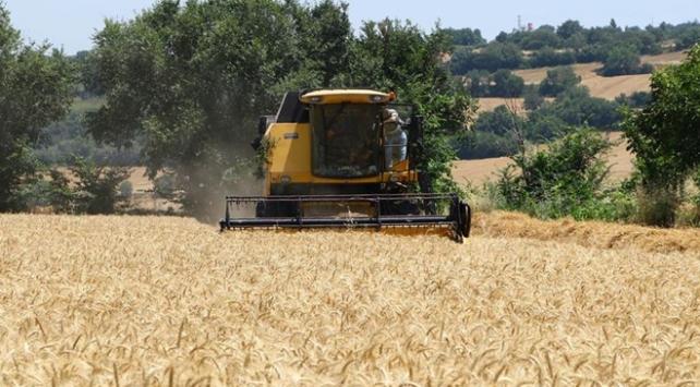 Tekirdağda Buğday bereketi
