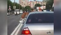 Rusya'da bir kaplan aniden yola atladı