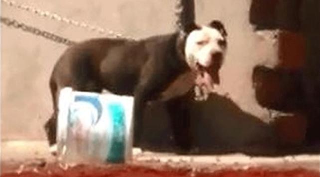Zincirle bağlandığı çatıda ölen köpeğin sahibine para cezası