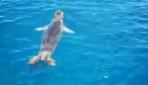Teknedekilerin sevimli yol arkadaşı Akdeniz foku