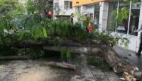 Aksaray'da şiddetli rüzgar ağacı yerinden söktü