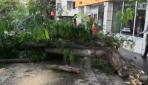 Aksarayda şiddetli rüzgar ağacı yerinden söktü