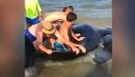 Balina kurtarma operasyonu böyle görüntülendi