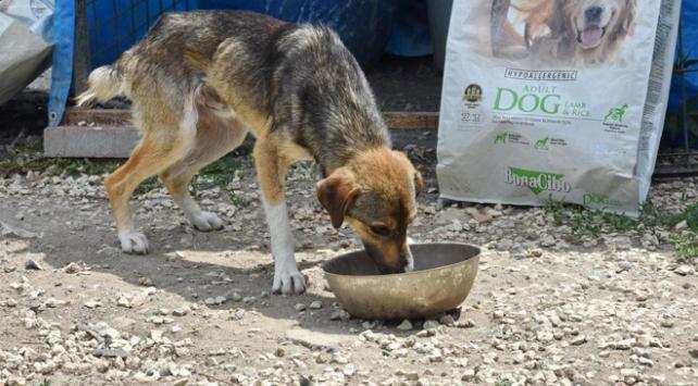 Sokak köpeğine şiddete para cezası