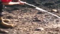 Yangında mahsur kalan kirpiyi itfaiye eri kurtardı