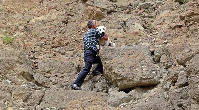 Samsunda yamaçta mahsur kalan köpek kurtarıldı