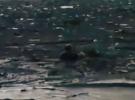 Düzce'de sele kapılan köpeği yüzerek kurtardı
