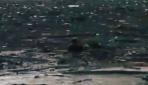 Düzcede sele kapılan köpeği yüzerek kurtardı