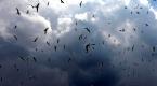 Çıldır Gölü uçmayı öğrenen yavru kuşlarla şenlendi