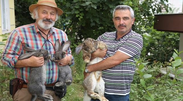 12 kiloluk tavşan ilgi odağı oldu