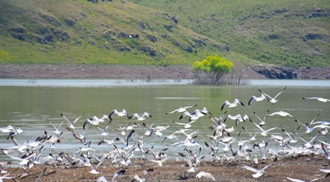 Su tutmaya başlayan baraj kuşlarla şenlendi