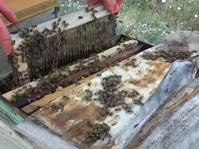 Arı zehri kozmetikten ilaç sanayisine birçok alanda kullanılıyor