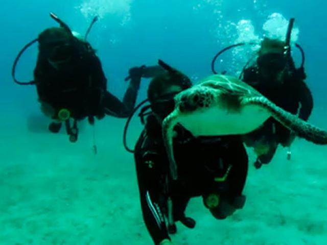 Dalgıçlara su altında carettalar eşlik ediyor