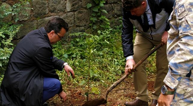 Etiyopya ağaç dikme rekoru için sokaklarda