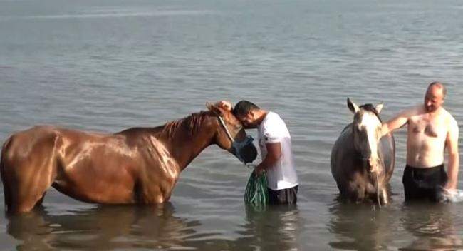 Arap atları yarışlara Van Gölü sahillerinde hazırlanıyor