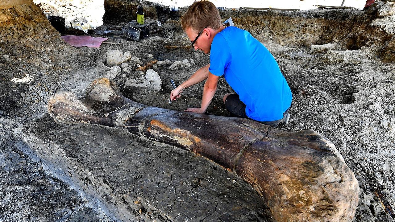 Fransada devasa dinozor kemiği bulundu