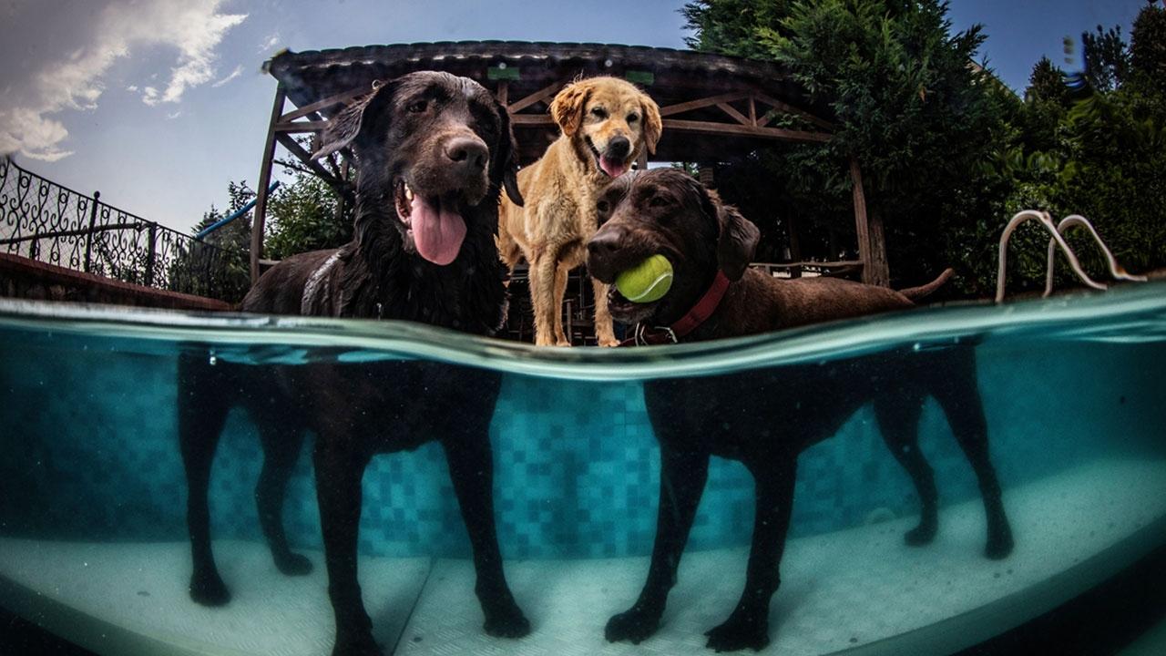 Sevimli hayvanlara suda terapi imkanı sağlayan otel