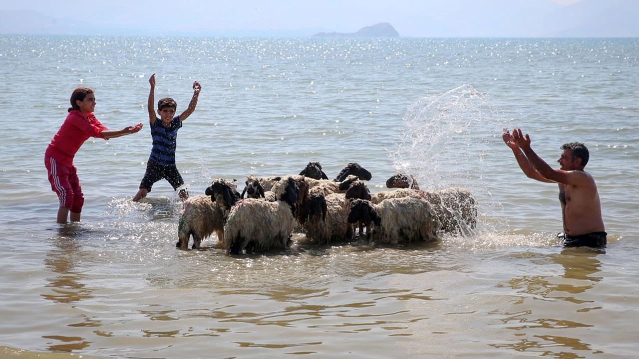 Çocukları ve kuzularıyla Van Gölünde serinledi