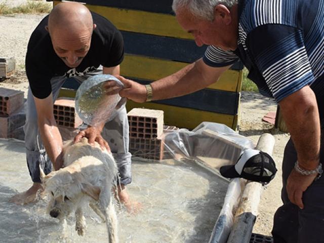 Sıcaktan bunalan sokak köpekleri onun ellerinde serinliyor