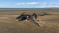 İzlanda'da karaya vuran 20 kılavuz balina öldü