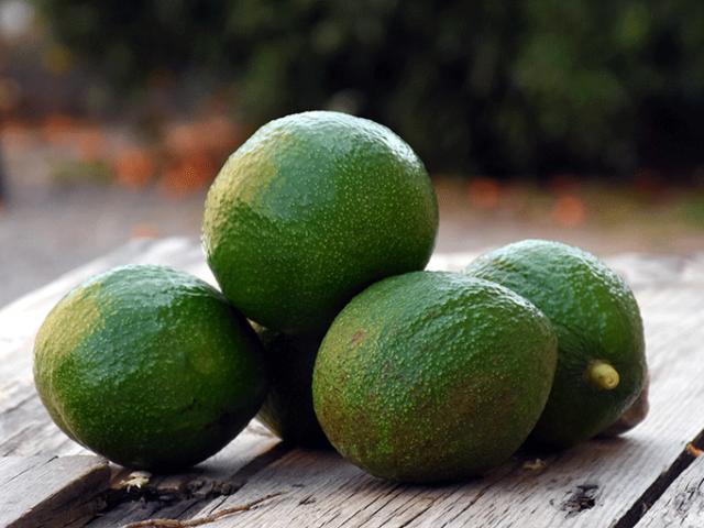Alanya avokadosunun ihracatı bu yıl erken başladı