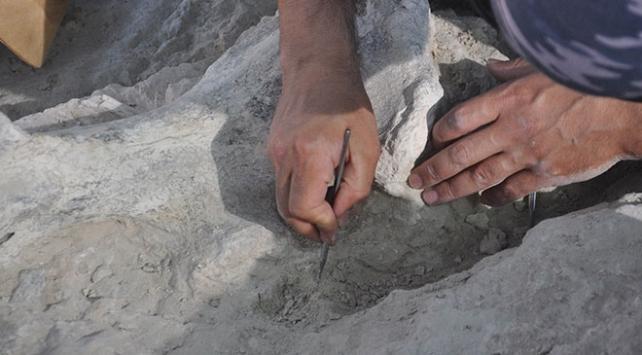 Nevşehirde birçok fosil gün yüzüne çıkarılıyor