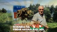 İstanbul'da fındık hasadı başladı