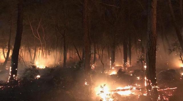 Çanakkalede orman yangını