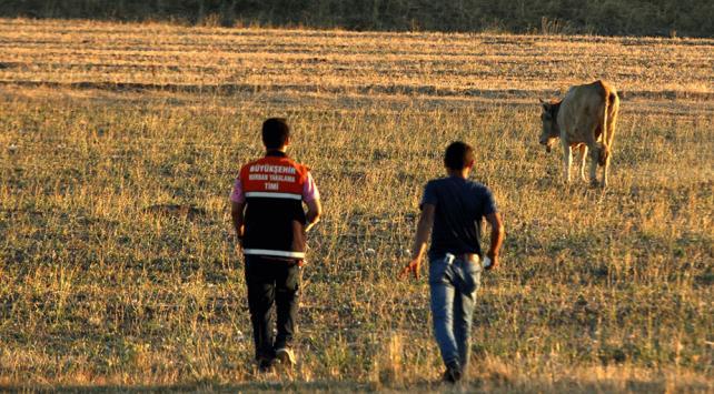 Kaçan kurbanlık 5 gün sonra askeri bölgede bulundu