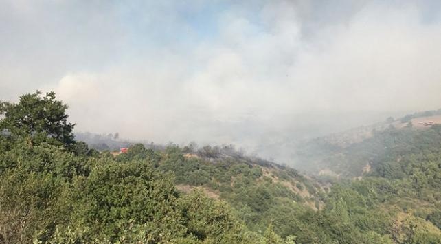Bursadaki orman yangınıyla ilgili 3 kişi tutuklandı