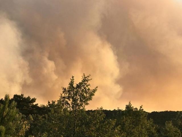Eskişehirde ormanlık alanda yangın