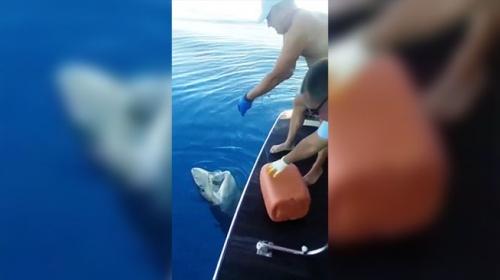 Tekne turu sırasında oltaya takılan 3 metrelik köpek balığı turistleri şaşırttı
