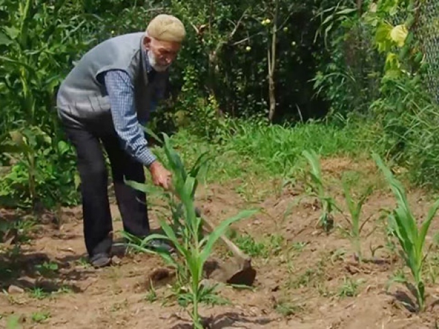 104 yaşındaki Mustafa dede her işini kendi yapıyor